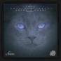 Antonio Pocai feat. Coyu - Coyu Raw Tracks Vol. 1